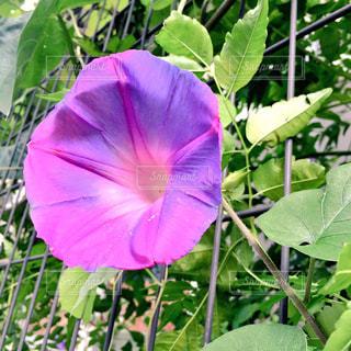 花の写真・画像素材[166743]