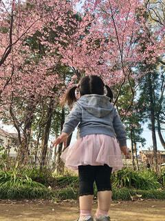 近所の桜の写真・画像素材[4279159]