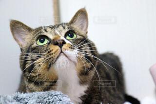 カメラの上を見ている猫の写真・画像素材[4836223]