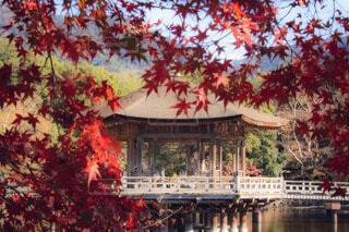日本の秋の写真・画像素材[3939371]