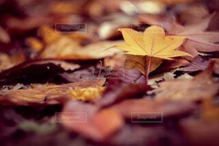 落ち葉の写真・画像素材[3939372]