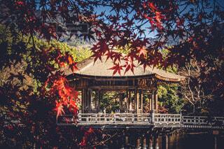 日本の紅葉の写真・画像素材[3939377]