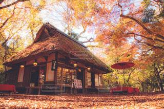 日本の紅葉の写真・画像素材[3939779]