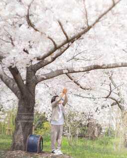桜と僕の写真・画像素材[4310556]