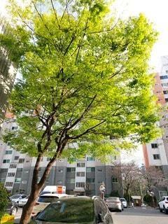 マンションの駐車場の木の写真・画像素材[4408508]