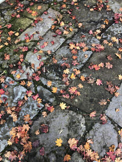 道に紅葉の落ち葉がきれいの写真・画像素材[3942694]