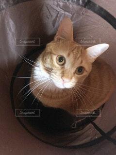 カメラを見ている猫の写真・画像素材[3942721]