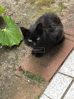 じっと見ていた黒猫の写真・画像素材[3943007]