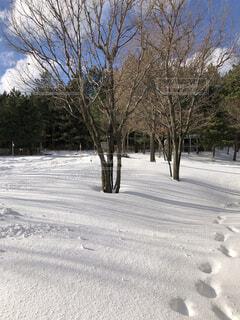 雪が積もった晴れた日の風景の写真・画像素材[3987844]