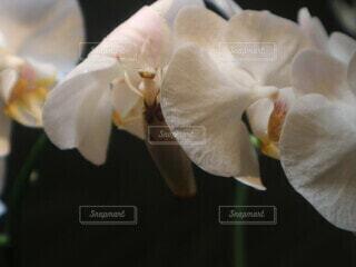 花,屋内,水族館,花びら,虫,カマキリ,草木,共存,フローラ,花カマキリ