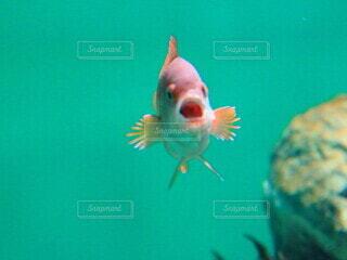 魚,水族館,鮮やか,水中,フィン,かわいい生き物,海洋生物学