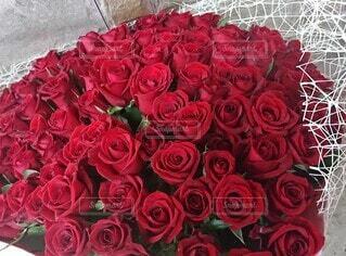 年の数の真紅のバラの写真・画像素材[3942203]
