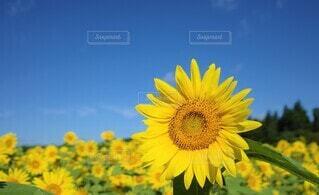 夏の思い出 花のクローズアップの写真・画像素材[3946674]