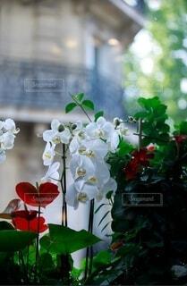 窓際の花たちの写真・画像素材[3942098]