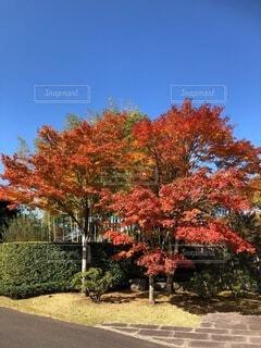 木のクローズアップの写真・画像素材[3955742]