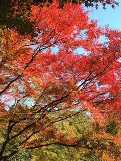 木のクローズアップの写真・画像素材[3955750]