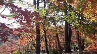 森の中の木の写真・画像素材[3985960]