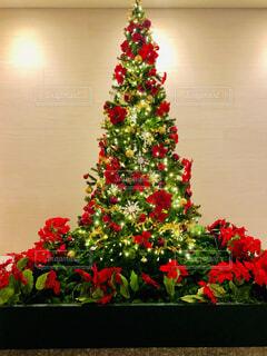 ポインセチアのクリスマスツリーの写真・画像素材[3976409]