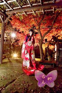 和風庭園の紅葉ライトアップで優雅に着物の女性の写真・画像素材[3948446]