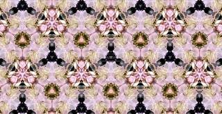 花,春,桜,ピンク,アート,花見,花びら,サクラ,満開,宴会,草木,桜の花,桜の木,早春,万華鏡,春爛漫,さくら,ガーデン,行楽,ブルーム,開花,ブロッサム,フローラ,寒椿桜,早咲の桜
