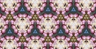 花,春,桜,ピンク,アート,花見,花びら,サクラ,満開,宴会,草木,桜の花,桜の木,早春,万華鏡,春爛漫,さくら,行楽,ブルーム,開花,寒椿桜,早咲の桜