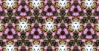 花,春,桜,ピンク,アート,花見,花びら,サクラ,満開,宴会,カラー,草木,桜の花,桜の木,早春,万華鏡,春爛漫,さくら,行楽,開花,ブロッサム,寒椿桜,早咲の桜