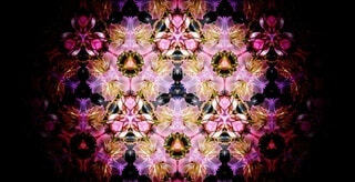 花,春,桜,ピンク,カラフル,アート,花見,花びら,サクラ,満開,デザイン,装飾,宴会,桜の花,桜の木,早春,万華鏡,春爛漫,さくら,パターン,行楽,開花,対称,寒椿桜,早咲の桜