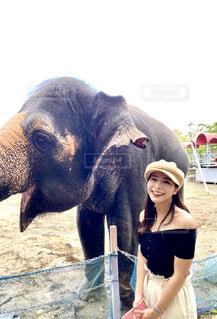 象の隣に立つ女性の写真・画像素材[4371519]