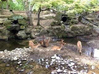 鹿溜まりの写真・画像素材[3957749]