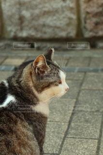 猫の横顔の写真・画像素材[3955023]