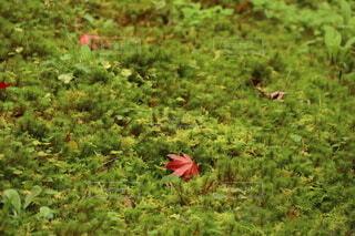 藻と紅葉の写真・画像素材[3962054]