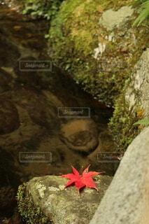 水辺の紅葉の写真・画像素材[3962052]