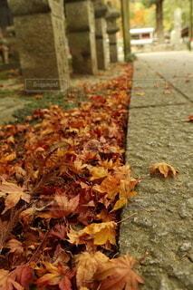 秋の落ち葉の写真・画像素材[3962053]