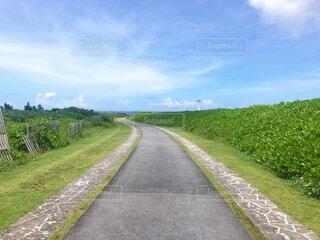 道の写真・画像素材[3962060]