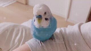 お喋り,至福の時間,幸せの青い鳥,ぴーちゃん,オパーリン,梵天インコ,ツイテル,神様見てるよ,お気に入りの言葉で,happyがいっぱい