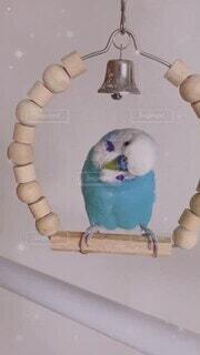 ブランコ,至福の時間,幸せの青い鳥,ぴーちゃん,梵天インコ,神様見てるよ,お気に入りの言葉,愛してるから