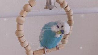 ブランコ,お喋り,幸せの青い鳥,ぴーちゃん,オパーリン,梵天インコ,大好きなベル,優しくchu,セミの鳴き声と合唱