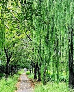 緑のトンネルの写真・画像素材[3985939]