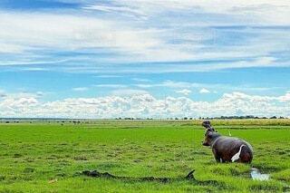 緑豊かな畑で放牧する牛の群れの写真・画像素材[4124044]