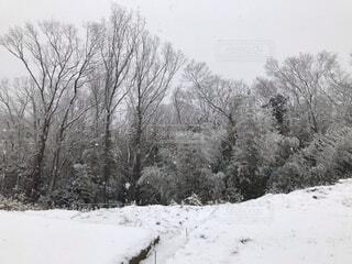 自然,風景,冬,森林,雪,覆う