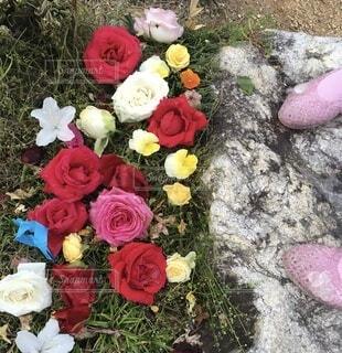 花,屋外,赤,カラフル,足,黄色,バラ,子供,薔薇,地面,草木