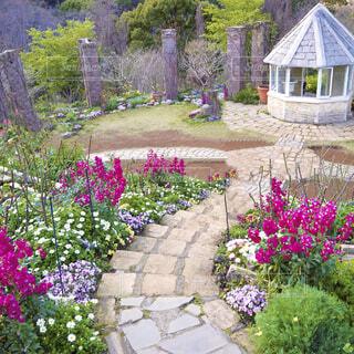 お花の道の写真・画像素材[4333716]