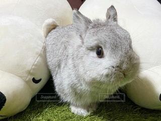 ぬいぐるみとウサギの写真・画像素材[3963614]