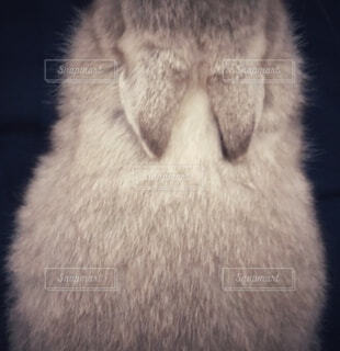 ふわふわな毛並みのうさぎの赤ちゃんの写真・画像素材[3970718]