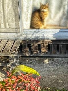窓際でひなたぼっこする猫の写真・画像素材[3974417]