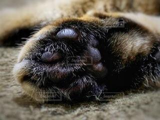 ネコの肉球の写真・画像素材[3991973]
