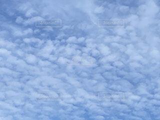 空いっぱいに広がったうろこ雲の写真・画像素材[4013958]