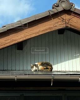 屋根の上で日向ぼっこする三毛猫の写真・画像素材[4036747]