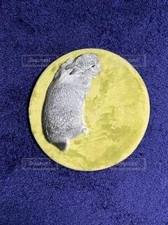 まるで月のうさぎみたいの写真・画像素材[4041384]