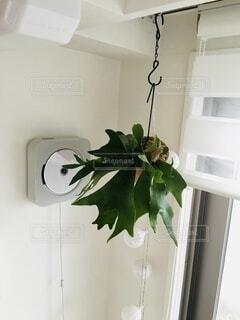 窓に観葉植物をの写真・画像素材[3975914]